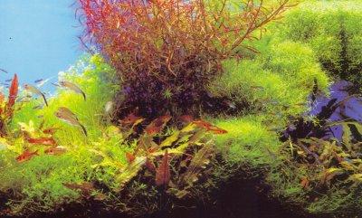 Что нужно знать для ухода за аквариумом