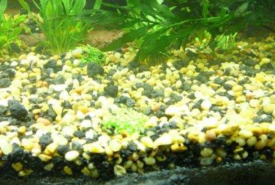 Грунт в аквариуме