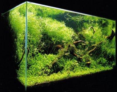 Собственный дизайн аквариума для начинающего