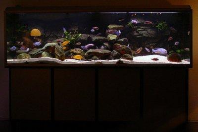 Дизайн аквариума для цихлид
