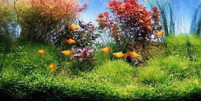 Выбираем рыб для аквариума